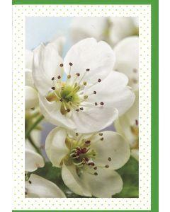 6 Wenskaarten met envelop - Bloemen zonder tekst (12x17.5 cm)